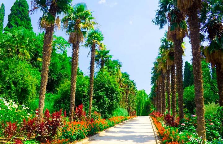 Аллея в Никитинском ботаническом саду