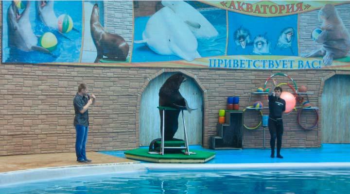 """Дельфинарий """"Акватория"""