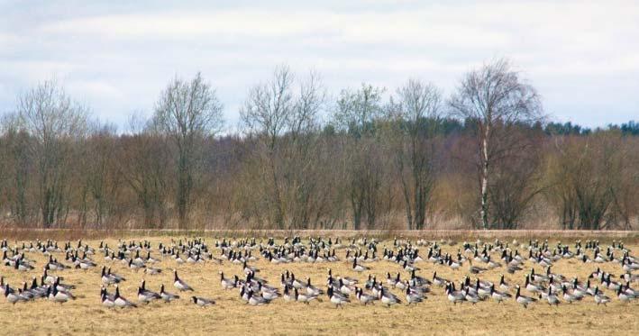 Олонецкие поля с птицами