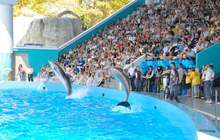 Дельфинарий в Сочинском парке