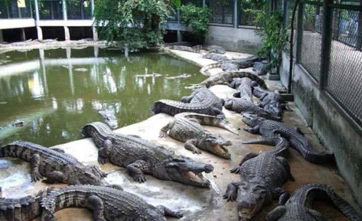 Искусственные крокодилы Архипо-Осиповки
