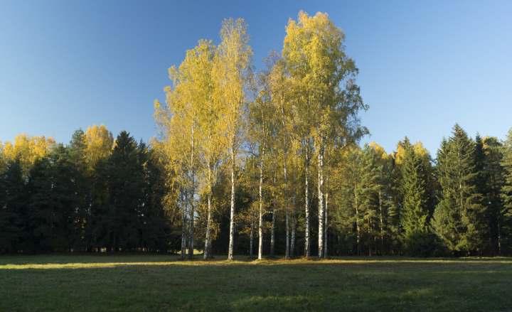 Роща в городе Павловске