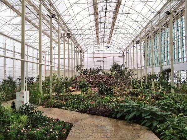 фото ботанического сада в кемерово