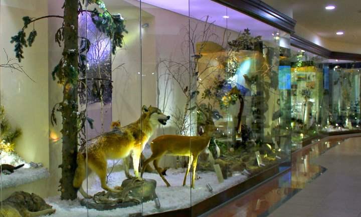 Посещение музея доставит особое удовольствие любителям истории