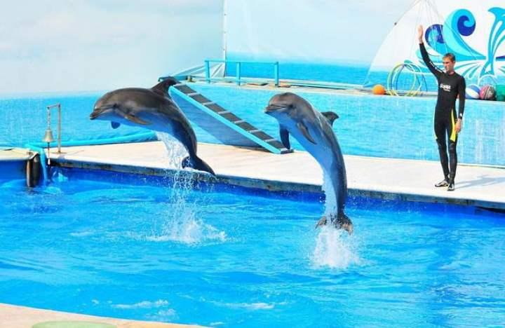Основные актеры, выступающие в театре – дельфины, морские котики, моржи, белуги.