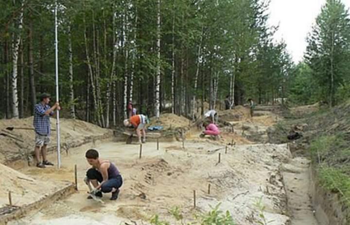 Сосновый лес города Сургут