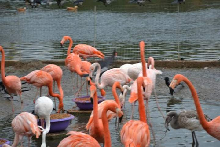 Розовые птицы