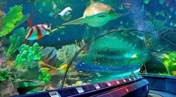 В этой части океанариума расположены 80 аквариумов разных размеров и форм, они занимают около 12 тысяч квадратных километров.