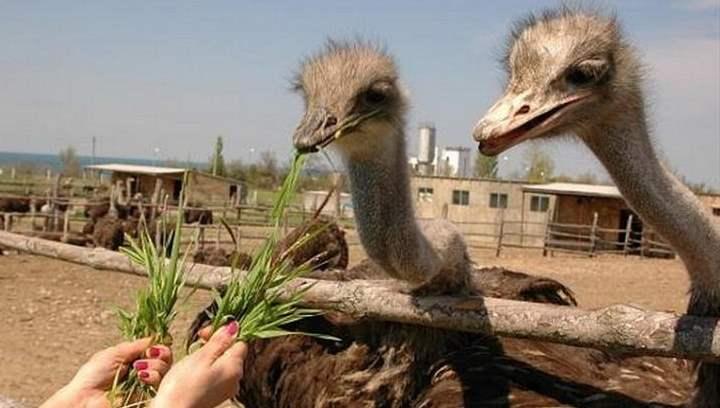 Здесь можно полюбоваться птицами и покормить их