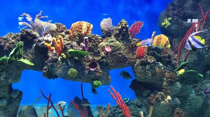 расположены большое количество аквариумов, где плавают рыбы и другие морские обитатели