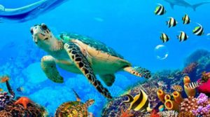 какие самые лучшие океанариумы есть в Москве