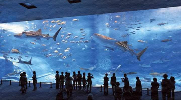 Большой бассейн с акулами