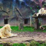 История создания Ижевского зоопарка