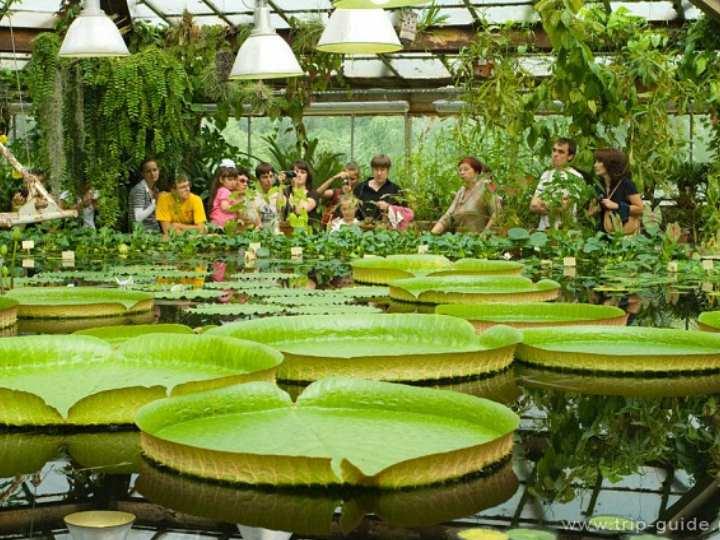 Дендрарий располагает большим количеством древесных растений, хвойных растений и кустарников.