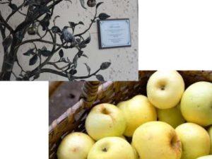 яблоневый музей