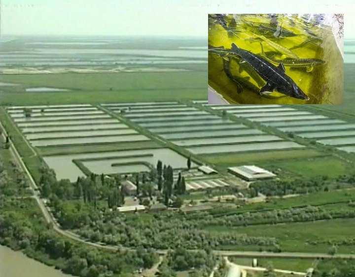 Осетровый завод
